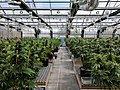 Commercial Cannabis Greenhouse Facility.jpg