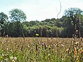Corfe Mullen Meadow Nature Reserve - geograph.org.uk - 30796.jpg