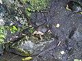 Costa Rica (6110131901).jpg