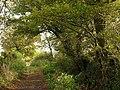Cottles Lane - geograph.org.uk - 1024347.jpg