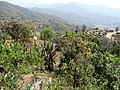 Countryside Viewed from Back Porch of Newa Guest House - Bandipur - Nepal (13581450624).jpg