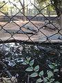 Crocodile002.jpg