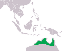 Crocodylus johnsoni Distribution.png