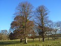Crowsley Park - geograph.org.uk - 1059499.jpg