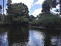 Crystal River Preserve State Park.jpg