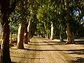 Cueva de Eucaliptus (di cementerie) - panoramio.jpg