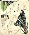 Curtis's botanical magazine (Tab. 5530) (8568726917).jpg