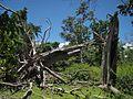 Cyclone Marcia damage.jpg