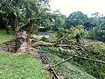 Cyclone Ockhi damage in Sri Lanka (1).jpg
