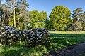 Dülmen, Welte, Rhododendronwald -- 2020 -- 6907.jpg
