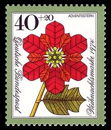 Euphorbia Pulcherrima Wikipedia La Enciclopedia Libre