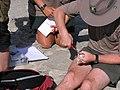 DOC Fairy Tern photos 02.jpg