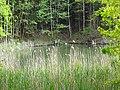 DSC02289 Teich zur Aufzucht autochthoner Fischarten..jpg