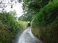 Dartmoor National Park , Country Road - geograph.org.uk - 1412519.jpg