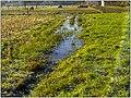 December Frost - Master Landscape Rhine Valley 2013 Hereford Bull - panoramio.jpg