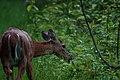 Delafield, WI, USA - panoramio - NaturesFan1226 (2).jpg
