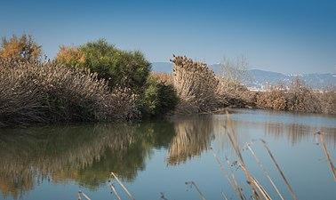 Delta del Llobregat 01.jpg