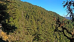 Binsar Devta - Deodar forest at Bindeshwar Mahadev