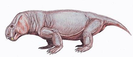 Vivaxosaurus