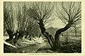 Die Pflanzenwelt (1913-1922.) (20940513665).jpg
