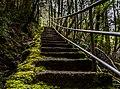 Dip Falls Forest Reserve, Tasmania.jpg