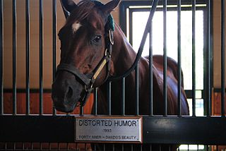 Distorted Humor American-bred Thoroughbred racehorse