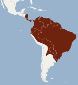Distribution of Myotis riparius.png