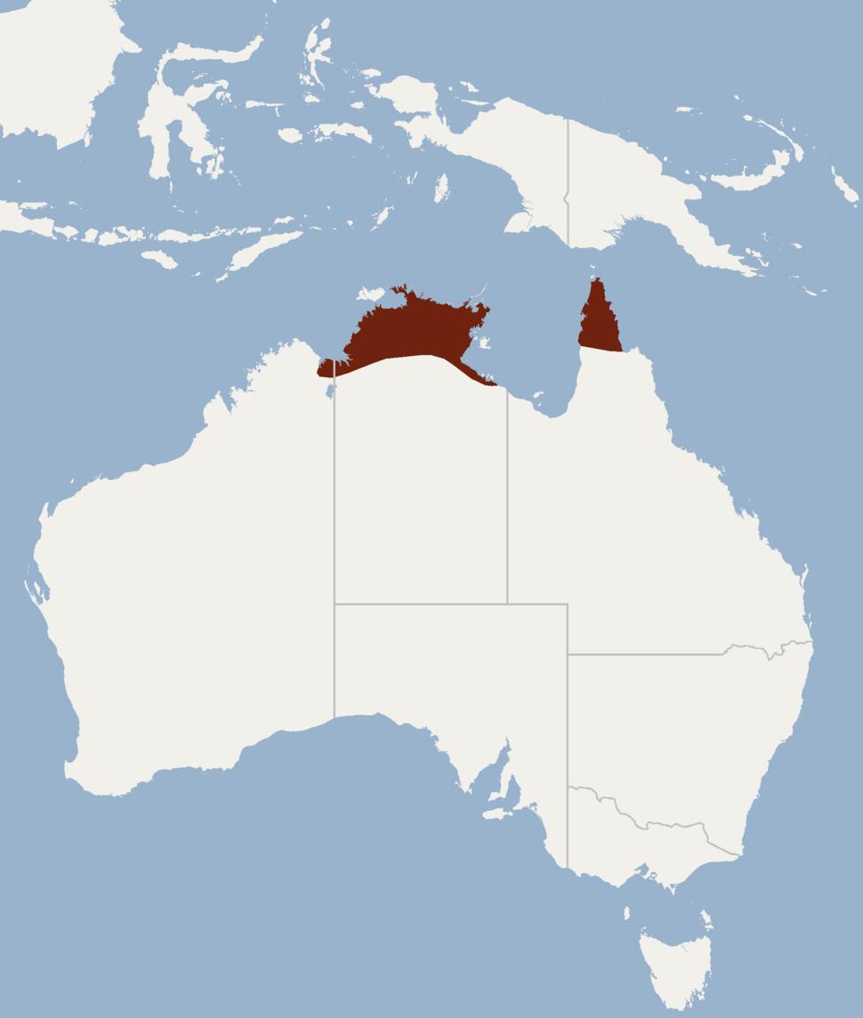 Distribution of Pipistrellus adamsi
