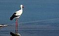 Dojran Lake 258.jpg