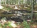 Doline im Wald - geo.hlipp.de - 13621.jpg