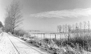 Drömling - Winterlicher Drömling