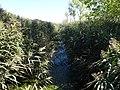 Dragoman marsh, Bulgaria 002.JPG