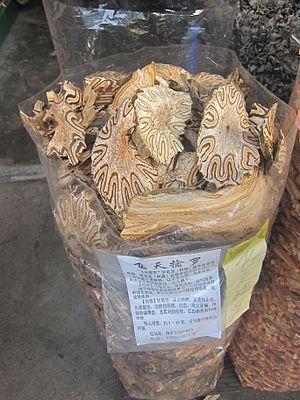 Cyathea - Dried Cyathea podophylla.