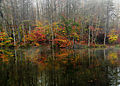 Duck-autumn-forest-morning-reflection-lake - Virginia - ForestWander.jpg