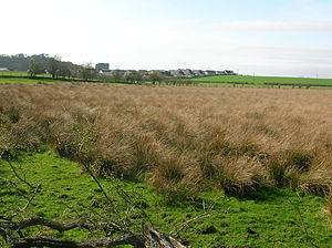 Dundonald, South Ayrshire - The site of Galrigs Loch with Dundonald in the background.