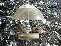 Durbec des pins (Pinicola enucleator) femelles.jpg