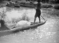 ETH-BIB-Transport im Kanu auf dem Niger-Tschadseeflug 1930-31-LBS MH02-08-0519.tif