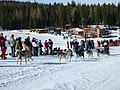 Eagle Cap Extreme Dog Sledding Race, Wallowa-Whitman National Forest (31245215074).jpg
