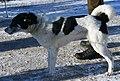 Eastlaika-white&black.jpg