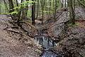 Eckbach Schwarzenbergpark Seitenerosion 2.jpg