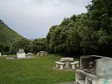 Ejemplares de Quercus ilex subsp. ilex.jpg