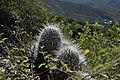 El Calvario, Metztitlán, Hgo., Mexico - panoramio (1).jpg