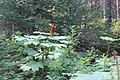 Emerald Lake IMG 5119.JPG