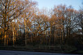 Epping Forest High Beach Waltham Abbey Essex England - roadside trees.jpg