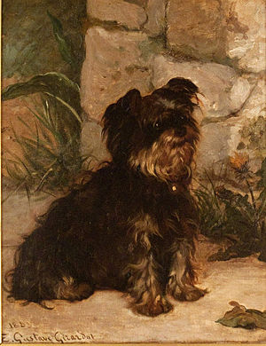 Yorkshire Terrier - Painting from the 19th century depicting a Yorkshire-like terrier by Ernest Gustave Girardot