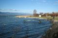 Estavayer lac.jpg