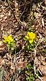 Euphorbia sp. (Euphorbiaceae) 02.jpg