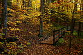 Fall-foliage-forest-foot-trail-bridge - West Virginia - ForestWander.jpg