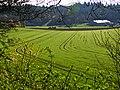 Farm - panoramio (22).jpg