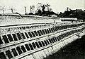 Farmers of forty centuries - Method of drying seaweed.jpg
